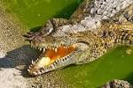 crocme.jpg-Amazing Facts About The Largest Living Reptiles You Need To Know (crocodile)